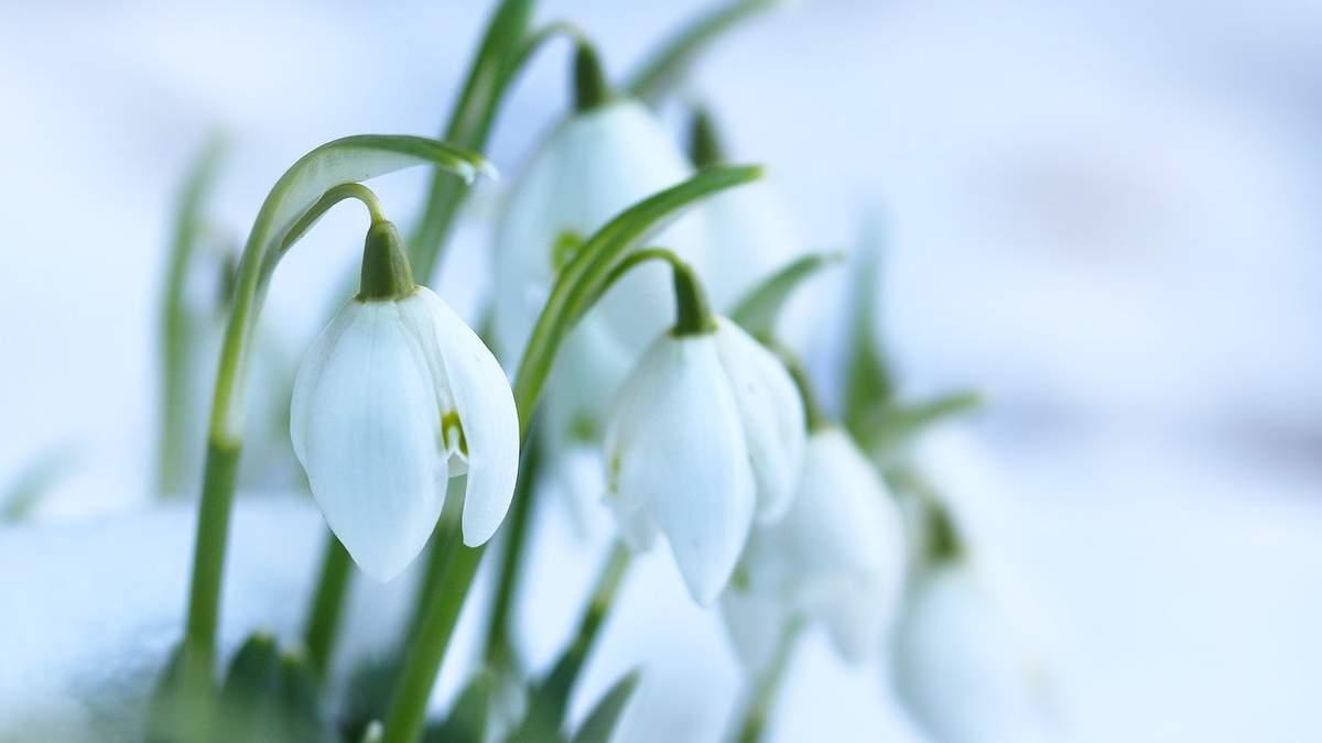 1 марта 2021 – какой праздник и что нельзя делать