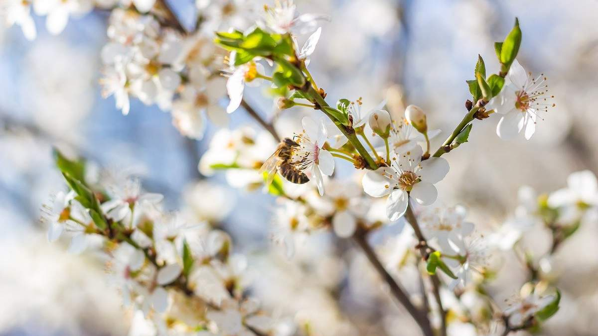 21 апреля – какой сегодня праздник и что нельзя делать в этот день