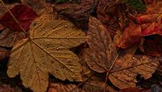 15 жовтня – яке сьогодні свято і що не можна робити в цей день