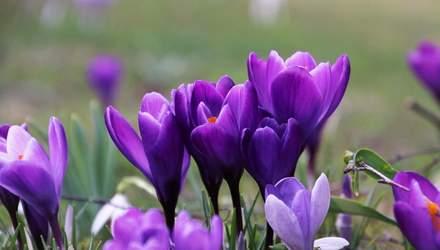 Вихідні у березні 2021: скільки днів українці відпочиватимуть у першому місяці весни