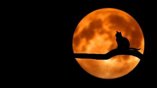 Мистическая тайна Вальпургиевой ночи: что означает праздник